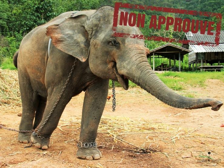 balade-elephants-thailande-chiangmai-3.jpg